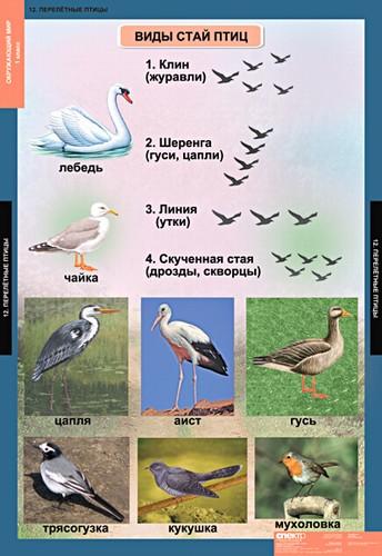 Перелетные птицы.