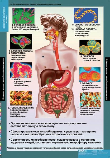 Как лечить грибок в организме народными средствами